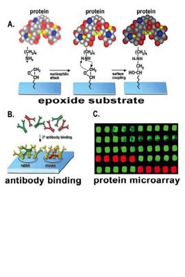 arrayit_protein