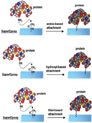 arrayit_protein2